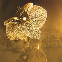 "SPA rituāls ""Zelta orhideja"""