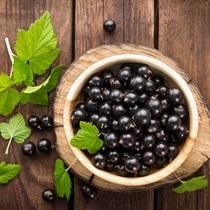Витамин С для всего тела - SPA из черной смородины