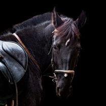 Izjāde ar zirgiem tumsā