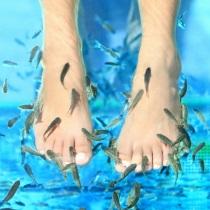 Garra Rufa zivtiņu SPA